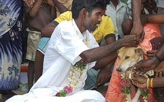 Man Dog Wedding