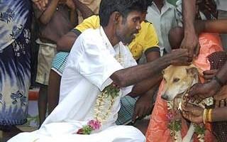Man Dog Wedding