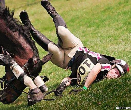 Horse Wreck