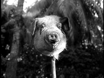 woman-finds-pig-head-on-pole