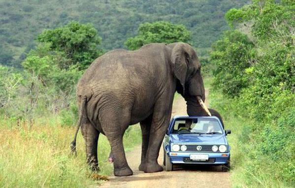 Elephant Check Point