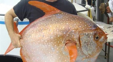 Scientists Just Found This Amazing Warm Blooded Fish