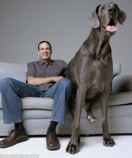 16-biggest-dogs-in-the-world33