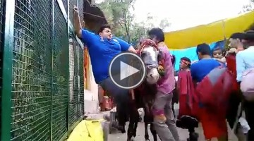 Watching This Huge Man Try To Get On This Horse Will Be The Funniest Thing You'll See Today
