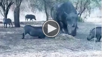 What This Rhino Does To This Warthog Shows You Just How Brutal Nature Can Be