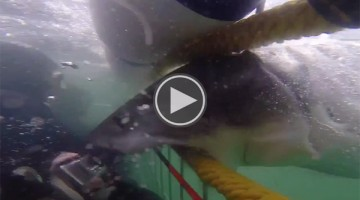 This Great White Shark Just Might Have Broken Its Jaw While Attacking Human
