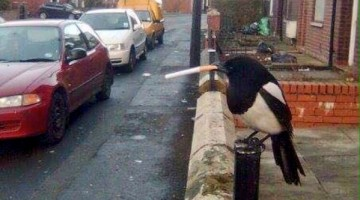 Cigarette Company Targets Birds For Potential Customers
