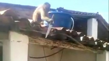 An Armed Monkey Terrorize A Community In Brazil