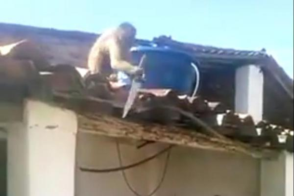 Drunk-monkey-armed-with-kitchen-knife-chases-bar-patrons