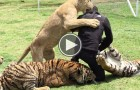 This Man Has A Scary Encounter While Playing With These Wild Tigers