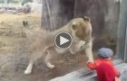 The Way This Lion Is Clawing At This Toddler Will Send Shivers Down Your Spine